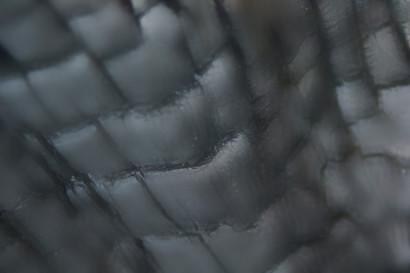 Edelweiss-a10.jpg