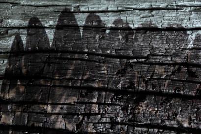 Edelweiss-k5.jpg